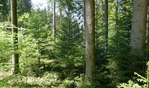 Artikelbild zu Artikel Sperrungen wegen Holzbringung